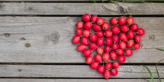 Red heart of hawthorn berries on a wooden background.